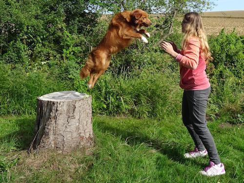 Traumhund.jetzt_Hundeschule und Labrador Zucht Jenny Seeland Seedorf Aarberg Schüpfen Lyss Bern Schweiz
