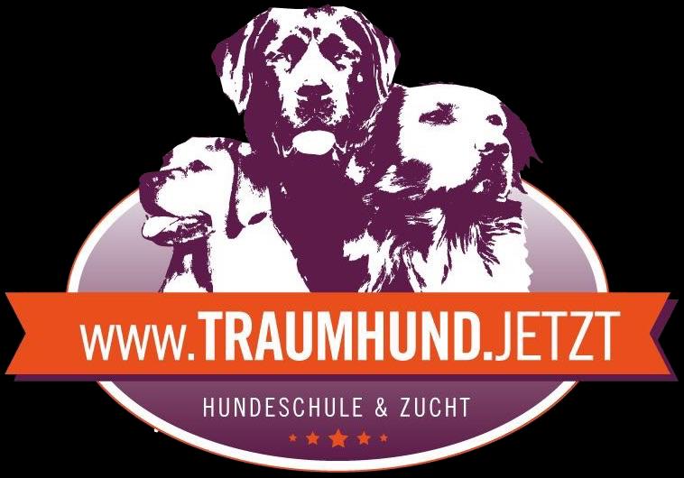 Traumhund.jetzt_Hundeschule und Labrador Zucht Seeland Seedorf Aarberg Schüpfen Lyss Bern Schweiz