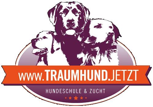 Traumhund.jetzt Hundeschule und Labrador Zucht Seeland Seedorf Aarberg Schüpfen Lyss Bern Schweiz